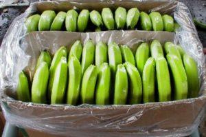 Banana Importer in Iran