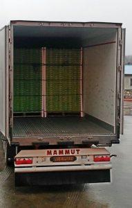 iran kiwi export
