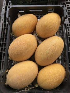 iran melon export