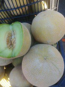iran melon export