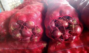 iran onion export