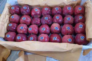 iran red apple export