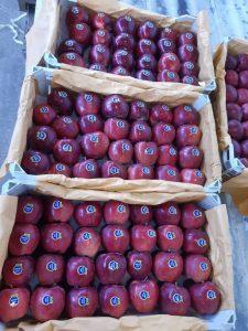 iran red delicious apple