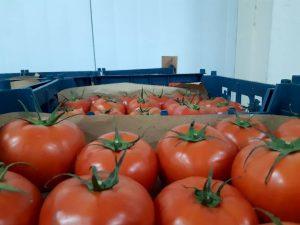 iran tomato export